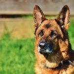 Devenir éleveur canin : formation et salaire